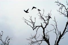 飞行影子的鸟 免版税库存图片