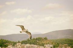 飞行悬而未决自由的海鸥 库存图片