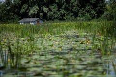 飞行房子的鸟使季节性乡愁一的河环境美化一些村庄水 库存图片