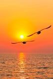 飞行日落的鸟 库存图片