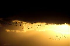 飞行日落的鸟 库存照片