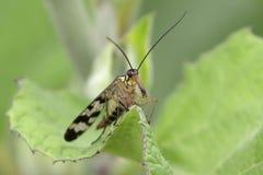 飞行昆虫 免版税库存图片