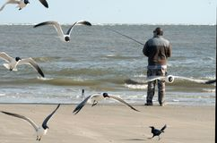 飞行海鸥、笑的鸥鸥属atricilla和一位渔夫有一根钓鱼竿的在海的背景 免版税库存照片