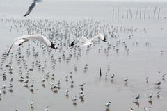 飞行海鸥二 免版税图库摄影
