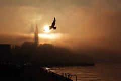 飞行海鸥在罗维尼 库存照片