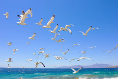 飞行海鸥群  库存图片