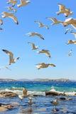 飞行海鸥群  图库摄影