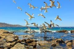 飞行海鸥群  免版税图库摄影