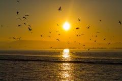 飞行海鸥鸟剪影群集,在s的金黄日出 免版税库存照片