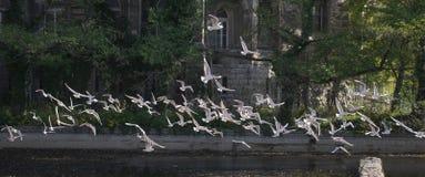 飞行海鸥 免版税库存图片