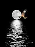 飞行满月的老鹰 免版税库存图片