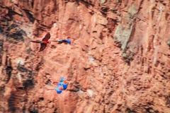 飞行猩红色金刚鹦鹉 库存照片