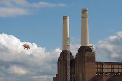 飞行猪 库存照片