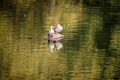 飞行白天的鸟 免版税图库摄影