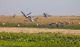 飞行白天的鸟 库存图片