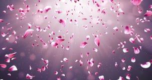 飞行的浪漫红色桃红色罗斯佐仓开花瓣落的背景圈4k