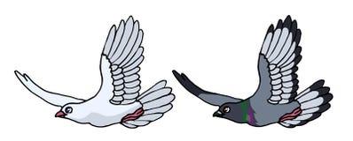 飞行的灰色鸽子和白色鸠 库存图片