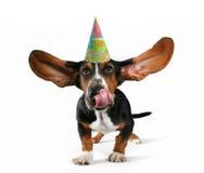 飞行的猎犬 免版税库存图片