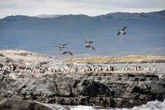 飞行的鸟,乌斯怀亚,阿根廷 库存图片