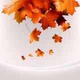 飞行秋叶背景。EPS 10 图库摄影
