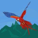 飞行红色和蓝色鹦鹉ara金刚鹦鹉 免版税库存图片