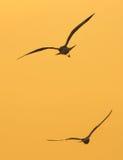 飞行纯海鸥天空的鸟 免版税库存照片
