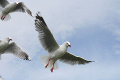 飞行自由 免版税库存图片