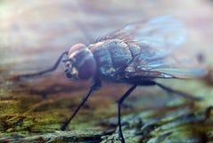 飞行臭虫昆虫剪影、insectophobia或者传染威胁概念 免版税库存图片