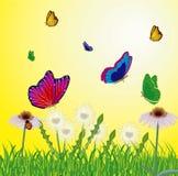 飞行草甸年的蝴蝶 库存照片