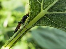 飞行蚂蚁坐一个绿色叶子宏指令 免版税库存照片