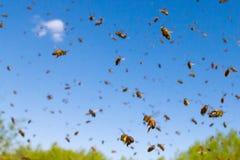 飞行蜂蜜蜂 免版税库存照片