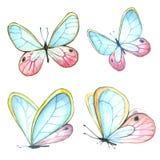 飞行蝴蝶汇集水彩  库存照片