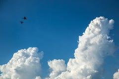 飞行通过与云彩的天空的朱鹭鸟 免版税图库摄影