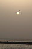 飞行通过太阳的鸟在日落 免版税图库摄影