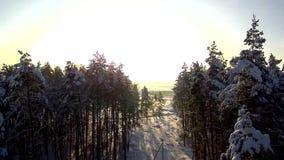 飞行通过输电线的砍伐森林 在日落的鸟瞰图在降雪 高速公路通过冬天森林和领域 冻结劈裂 股票录像