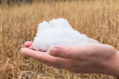 飞行雪花 吹的雪在冷淡的冬天在晴天停放 快乐的冬时 免版税库存照片