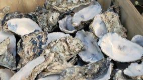 飞行飞行在牡蛎,纤巧 被吃的牡蛎 被损坏的食物概念 股票录像
