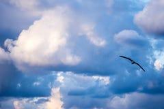 飞行高在天空的海鸥 免版税库存图片