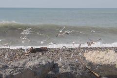 飞行鸥Hundrets在黑海巴统的 海鸥群飞行接近在晴朗的天气的海滩的 免版税图库摄影