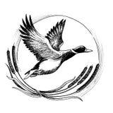 飞行鸭子 向量例证