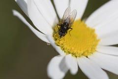 飞行,哺养在黄色花 免版税库存图片