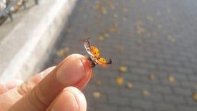飞行去小的臭虫 免版税图库摄影