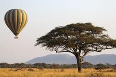 飞行绿色和黄色气球在金合欢树附近 库存图片