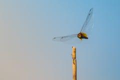 飞行蜻蜓 库存照片