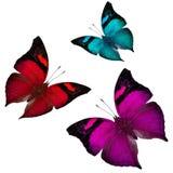 飞行蝴蝶,红色,蓝色和桃红色蝴蝶的混合在白色的 免版税图库摄影