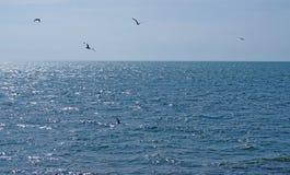 飞越有明亮的蓝色夏天天空的镇静深蓝色被日光照射了海的海鸥群  库存照片