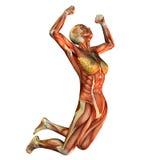 飞跃做肌肉学习妇女 免版税库存照片