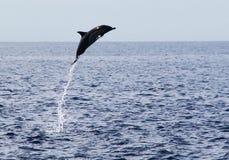 飞跃在水外面的海豚 免版税图库摄影
