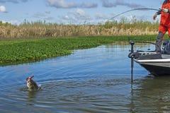 飞跃大嘴鲈和渔夫 免版税图库摄影