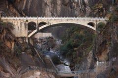 飞跃峡谷的老虎 图库摄影